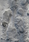 082 snow 194398