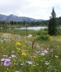 090 field lake 755029