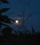 099 night 177898