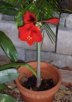 122 red plant 203944