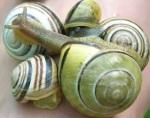 150 snails 164763