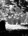 174 graveyard 748262