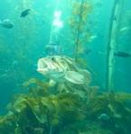 179 fish tank 623761