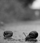 220 snails 725126