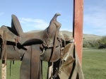 229 saddle 868720