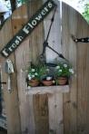 270 plant pots 125682