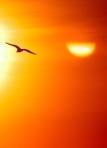 281 bird sunset 671148