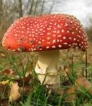 285 mushroom 635080