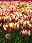 288 flowers 629614