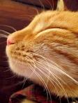 300 smug cat 648576