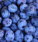 330 plums 858673