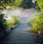 342 misty bridge 901976