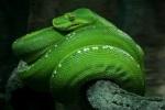 383 snake 896940
