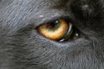 388 eye 690085