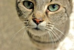 397 cat 871717
