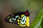 423 butterfly 763633
