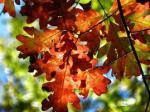 496 leaves 928670