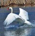 507 Mute Swan Landing 856707