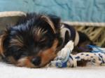 547 puppy 618644