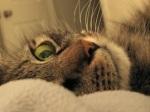 592 cat 906145
