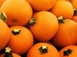 593 pumpkins 870086