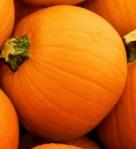 621 pumpkins 870086