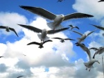 623 seagulls on flight 911349