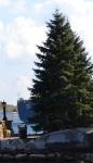 627 tree 877544