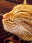 668 smug cat 648576