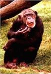 773 monkey 13878