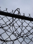883 barbed wire 188333