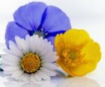946 flowers 184924