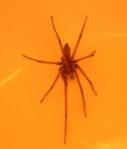 964-spider-97622