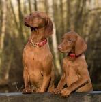 1072-pair-dog-1086286_640
