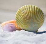 1074-pastel-shells-792912_640
