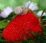 1082-snail-582205_640
