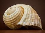 1086-shell-199712_640